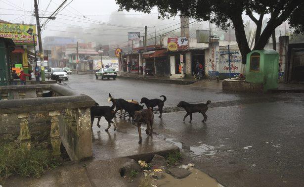 Atenderá Salud a los cinco mil perros callejeros