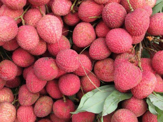SEDARH apoya a productores de litchi