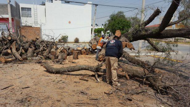 Se talan 12 árboles en promedio a la semana en Soledad