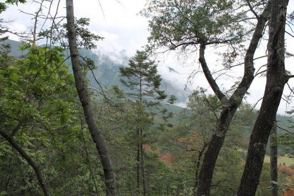 PRD se suma a protestas por tala de sierra en Xilitla