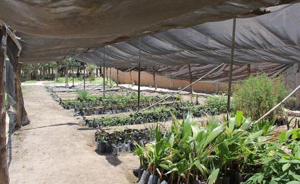 Vivero municipal recibe 3 mil plantas