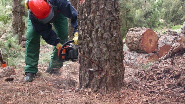 Presentan nueva solicitud de permiso de tala en Xilitla