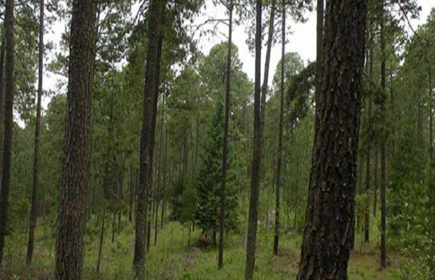 Con permiso de Semarnat talarán 2 mil hectáreas en Xilitla