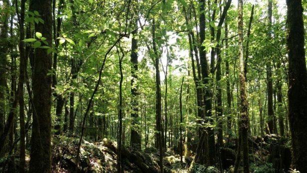 Quien promueve la tala de bosques es ex candidato del Partido Verde