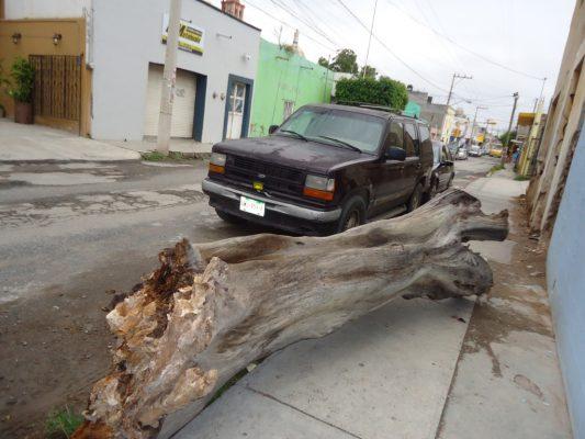 Vecinos desesperados porque ecología no retira enorme tronco de transitada banqueta