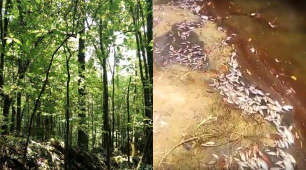 Revisarán problemática ambiental de Xilitla, Sierra de Álvarez y Río Gallinas