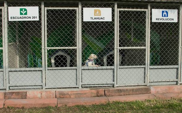 STC Metro rescata en promedio a 12 perros a la semana