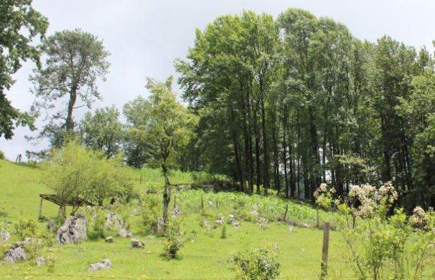 Niegan información sobre deforestación en Xilitla