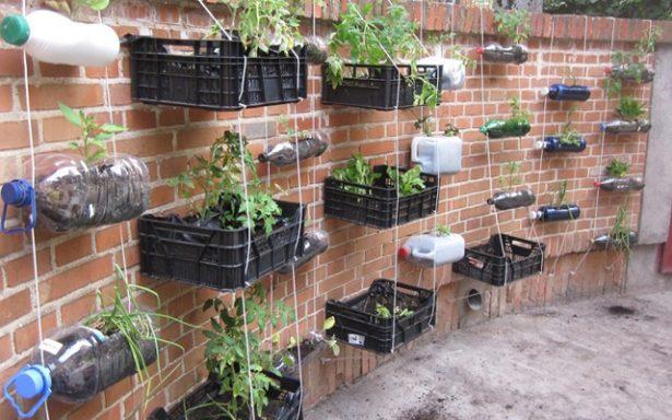 Crear huertos urbanos, buena alternativa para el autoconsumo