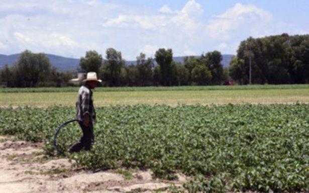 Vigilancia en labores agrícolas debe ser permanente: Diputado