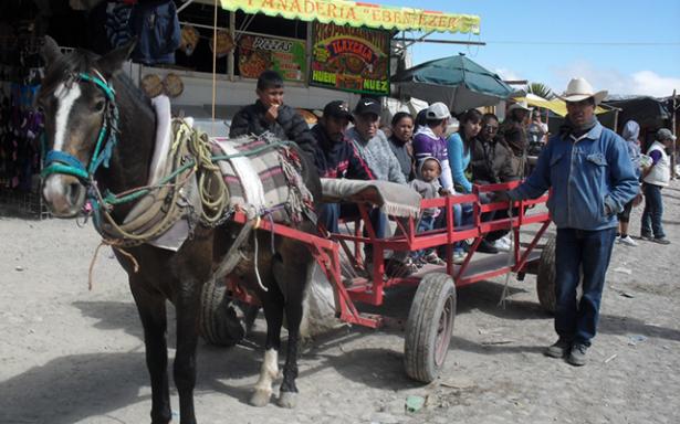 Carretoneros de Real de Catorce explotan mulas y caballos hasta que revientan de cansancio