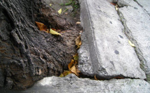 Vigilancia y reparación de calles piden colonos de Lomas del Real