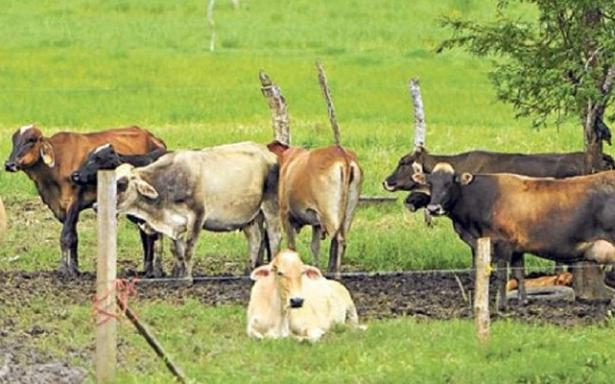Importante cambio de status sanitario para que la ganadería crezca