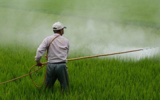 Mayor control al uso de plaguicidas y fertilizantes