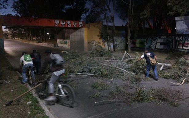 Caída de árbol y derrame de aceite genera caos vial en zona metropolitana