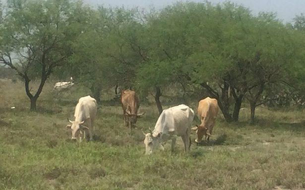 Previenen a ganaderos contra la rabia paralitica