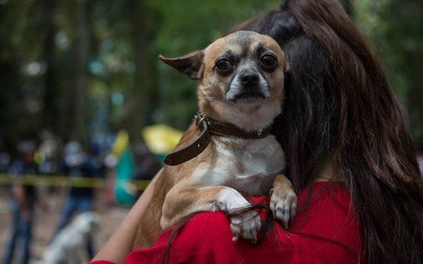 De 10 a 15 reportes recibe albergue de mascotas, para hacerse cargo de perros
