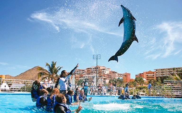 ¡Aprueban prohibición de espectáculos itinerantes con mamíferos marinos!