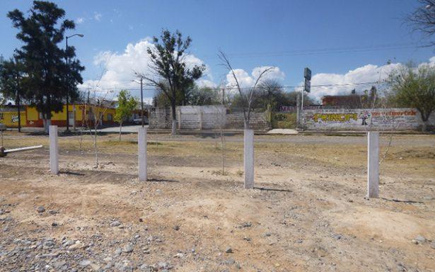 reforestación en Ángel Veral (2)