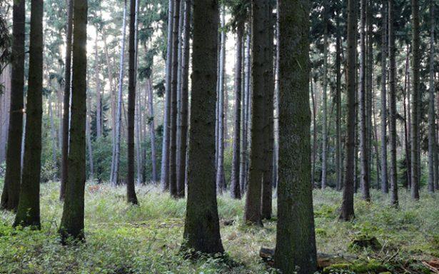 Este año aplicará Conafor 136 mdp para sector forestal en SLP