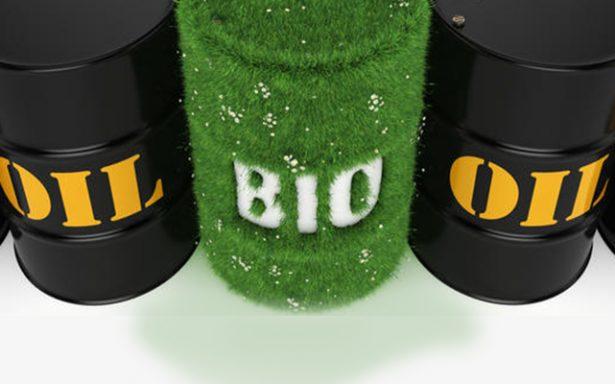Universitarios proponen combustibles biológicos