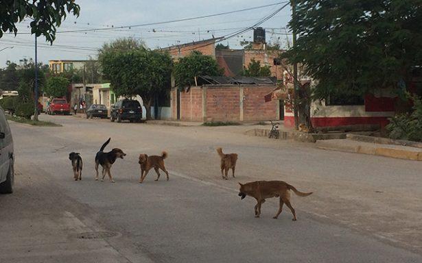 Crearán asociación y albergue para proteger animales de la calle