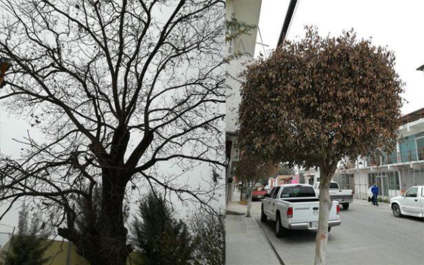 Frío acaba con árboles en Soledad