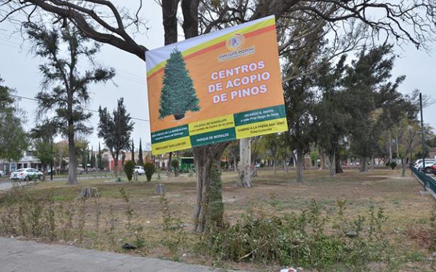 Exhortan a la población a utilizar centros de acopio para pinos navideños