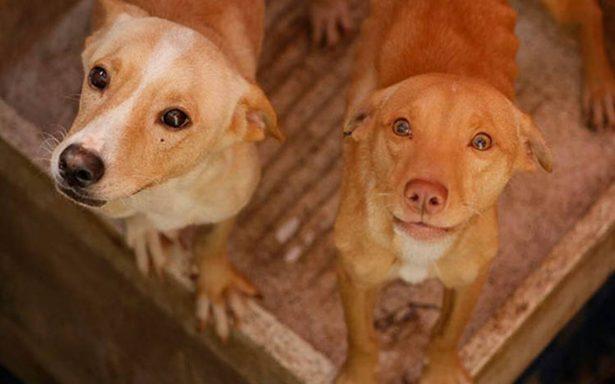 [Video] Perros abandonados se comen entre ellos