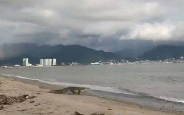 Profepa investiga muerte de cocodrilo en Puerto Vallarta