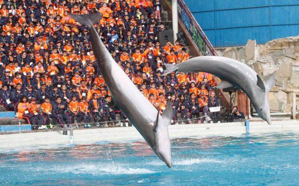 Persiste explotación de delfines en México