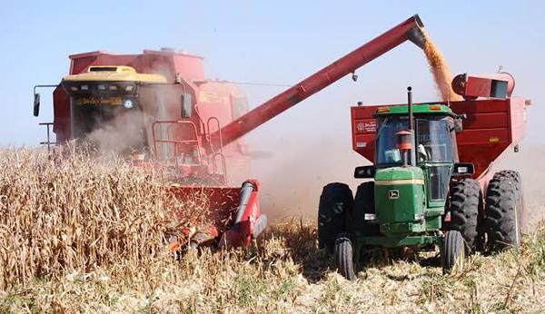 Gobierno federal reitera precio 3 mil 800 la tonelada de maíz y 4 mil 900 para trigo