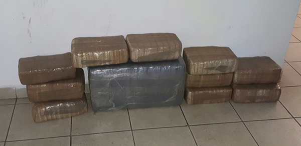 Policías aseguran 20 kilogramos de mariguana en Mojolo