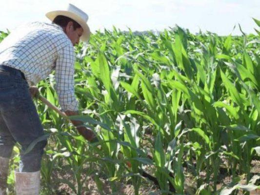 Compromete Aserca pago de más de mil 300 mdp a productores