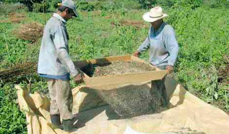 Analiza SAyG promover siembra de ajonjoli para terrenos de temporada