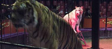 Tigre escapa de circo en París y su dueño lo mata