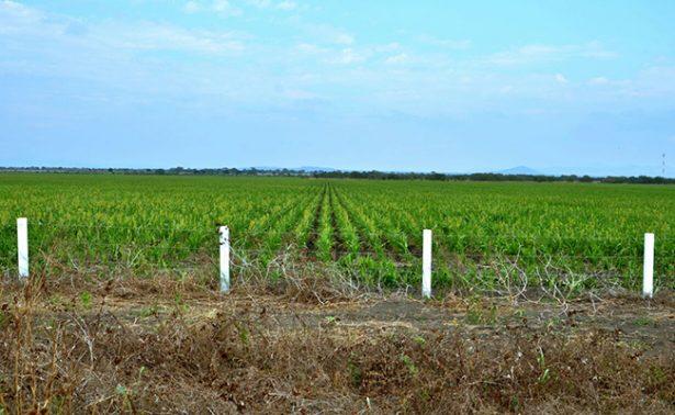 Agricultores de Altamira beneficiados por lluvias
