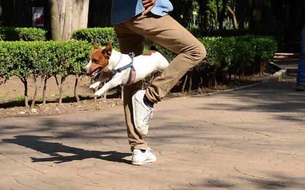 Los beneficios de tener una mascota en tu vida