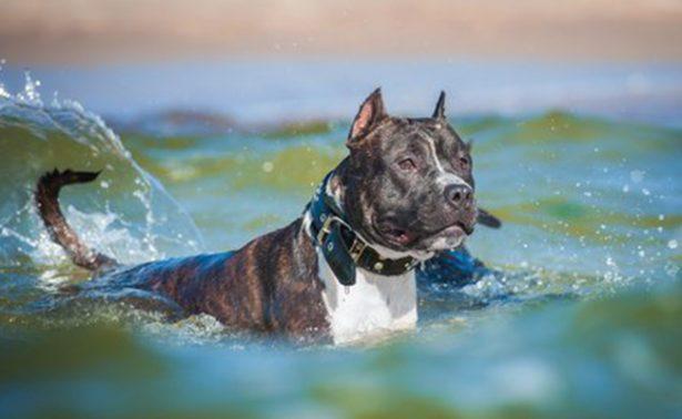 Tiburón devora a perra en playa de Australia
