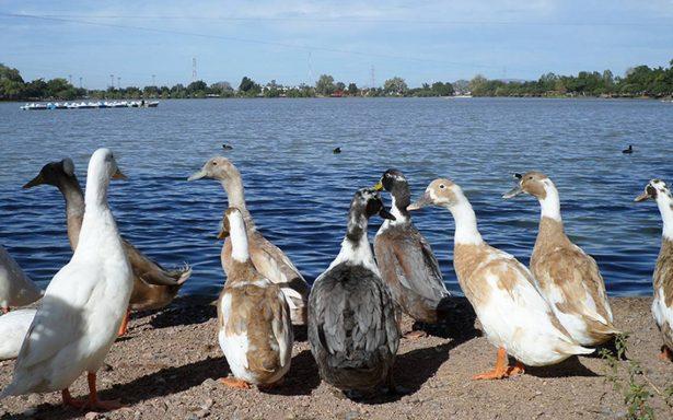 Piden respeto para aves migratorias
