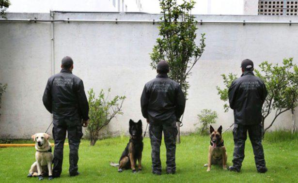 """PGR recibe en sus filas a 33 """"agentes peludos"""" de talla internacional"""