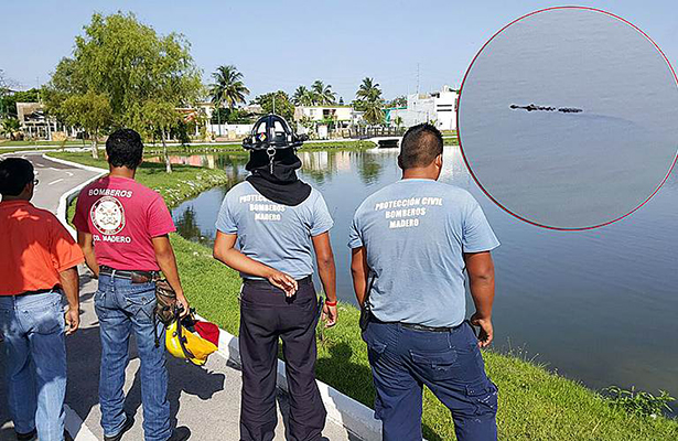 Encuentran cocodrilo en el lago del Parque Bicentenario