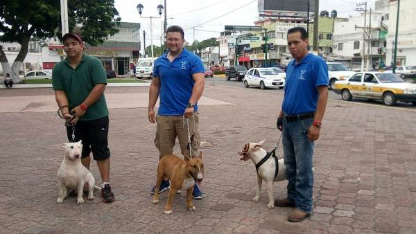 Dueños de Perros Marcharán Para Mejorar la Imagen de Razas Consideradas Agresivas.