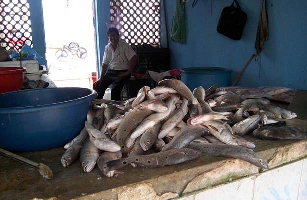 Veda en Tamesí no Afecta Precios de Pescados y Mariscos en la Zona