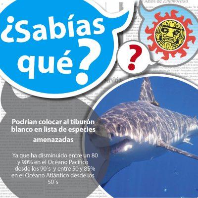 EEUU sopesa tomar al tiburón blanco como especie amenazada