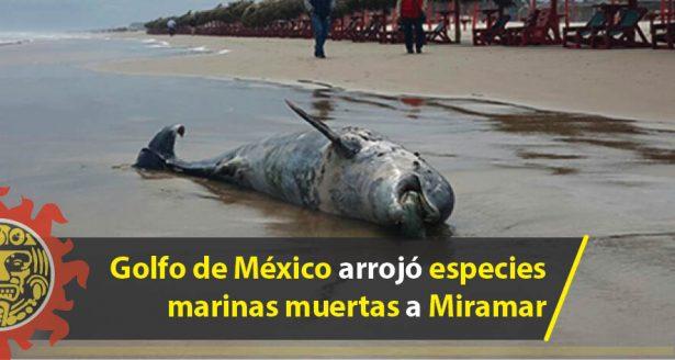 Golfo de México arrojó especies marinas muertas a Miramar