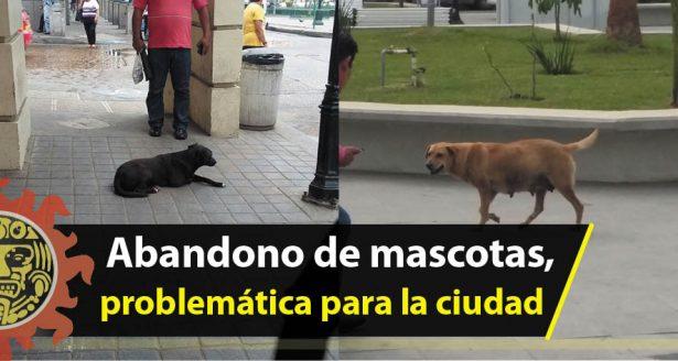Abandono de mascotas, problemática para la ciudad