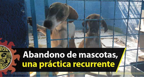 Abandono de mascotas, una práctica recurrente