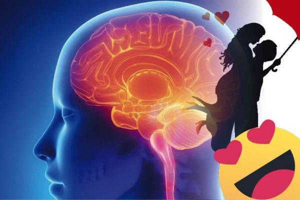 La química del amor se produce en el cerebro