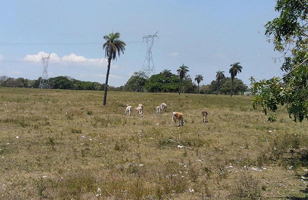 Sequía detiene actividad ganadera, agrícola, y suministro de agua potable